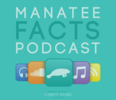 Stickers: Manatee Facts Podcast